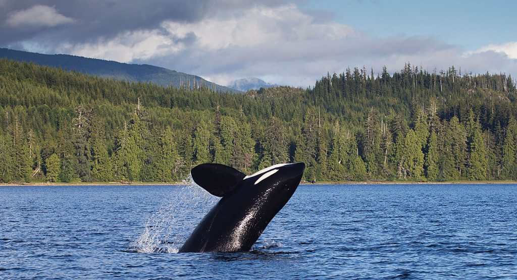 Whale watching Teen Travel